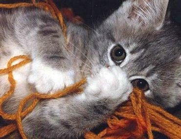 O pisica draguta