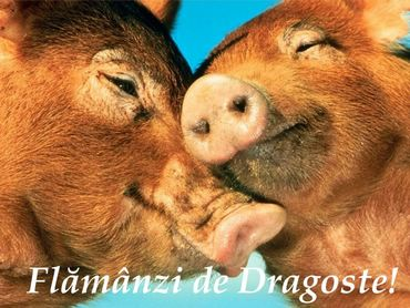 Flamanzi De Dragoste