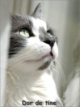 Pisica Dor De Tine