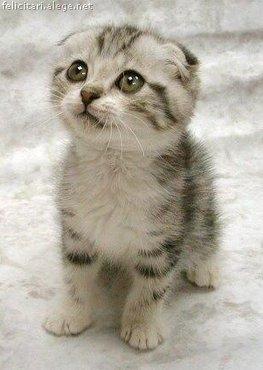 O pisica dragutza