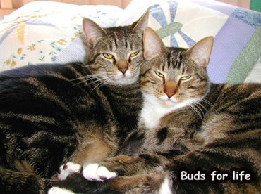 Buds For Life
