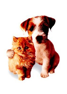Prieteni Catel Si Pisica