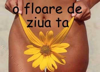 Floare Bikini