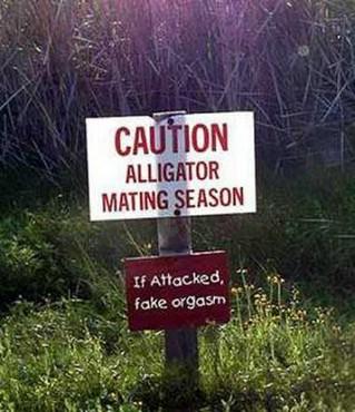 Caution Alligator
