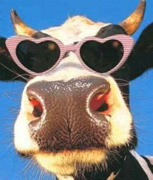 Vaca Cu Ochelari