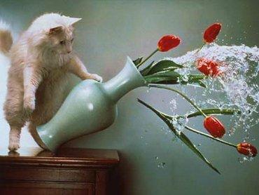 Pisica Cu Vaza