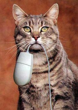 Pisica Cu Mouse