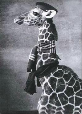 Girafa Pe Punct De Plecare