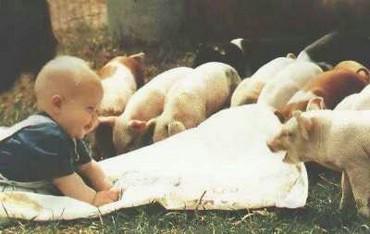 Copilul Intre Porci