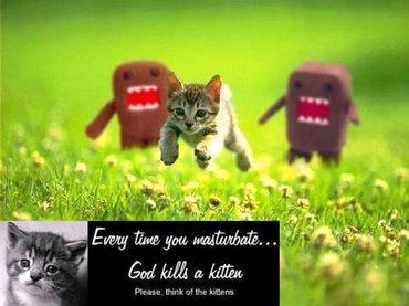 Pisicile...