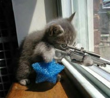 Pisica sniper