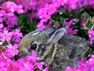 Iepurasi - Miroase Flori