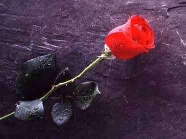 Trandafir Pentru Tine