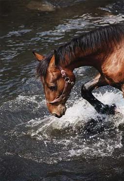 Calul La Apa