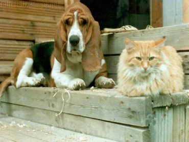 Dog And Cat On Steps