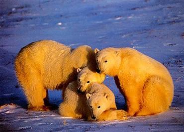 Trei Ursi