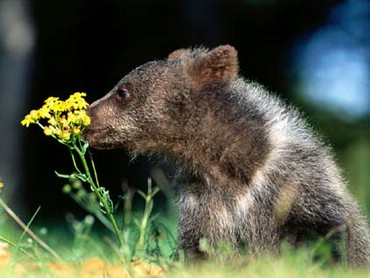 Pui Cu Floare