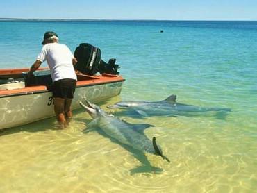 Delfini Langa O Barca