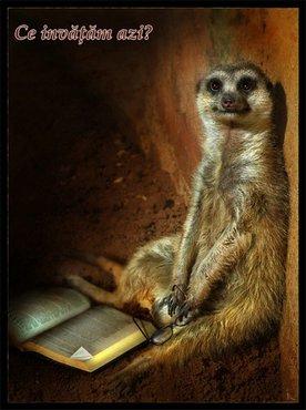 Animale Oppossum