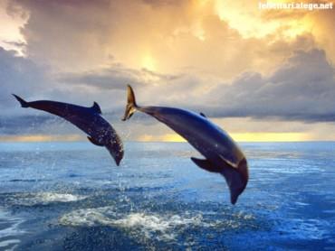 Bottlenose dolphins 2