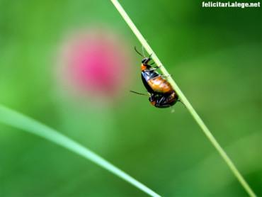 Bugs togheter