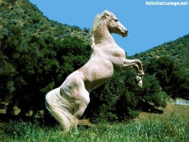 Destiny Horse