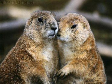 Groundhogs In Love