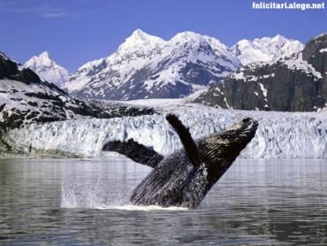 Humpback whale 2