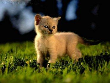 Kitten Meadow