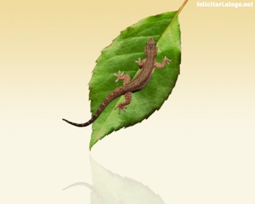 Lizard and leaf