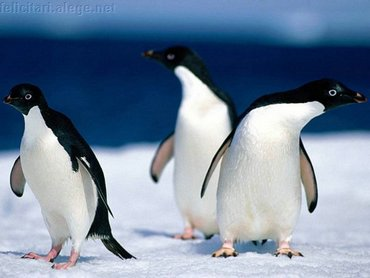 Lost Penguins