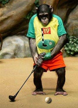 Maimuta Golf