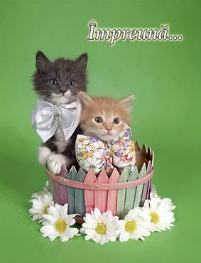 Pisici Impreuna
