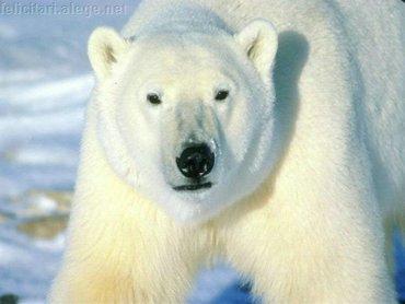 Polar Bear Stride