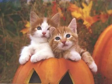 Two Kittens In A Pumpkin Pot