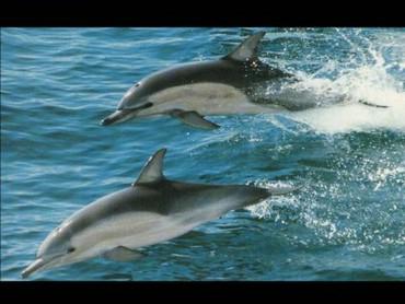 Delfini Sarind