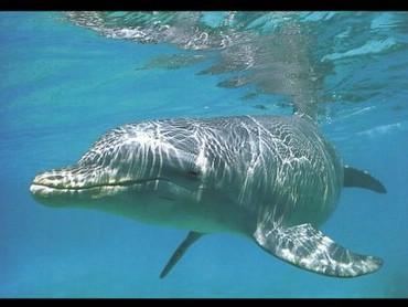 Delfin Frumos