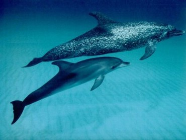 Delfini Jucanduse