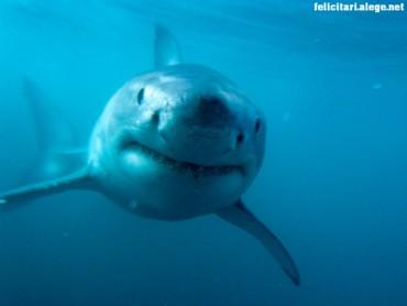 Predator shark