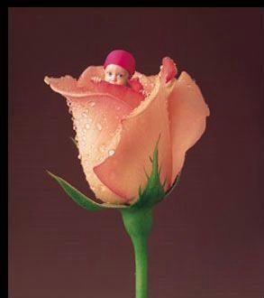 Copil In Trandafir