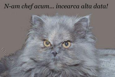 Fara Chef