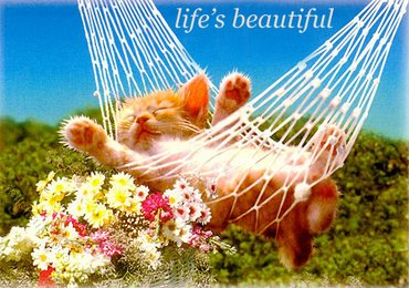 Life Beautiful