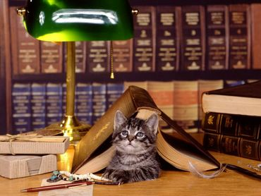 Pisica Invata