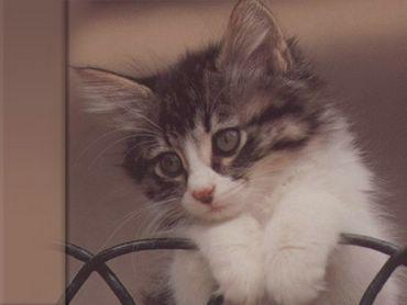 Pisica Dulce