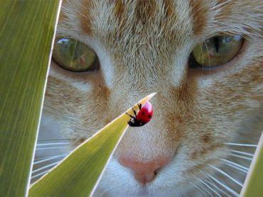 Pisica Si Buburuza