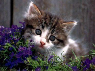 Pisica Intre Flori
