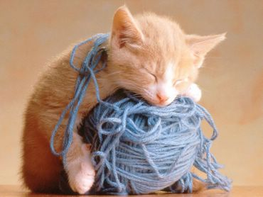 Pisica Cu Un Ghem