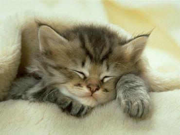 Pisica Doarme Pe Canapea