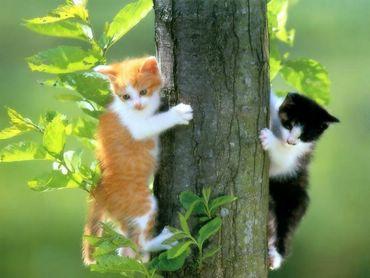 Doua Pisici In Copac