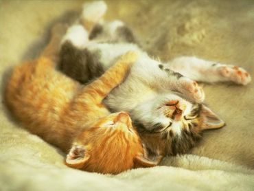Doua Pisici Somnoroase